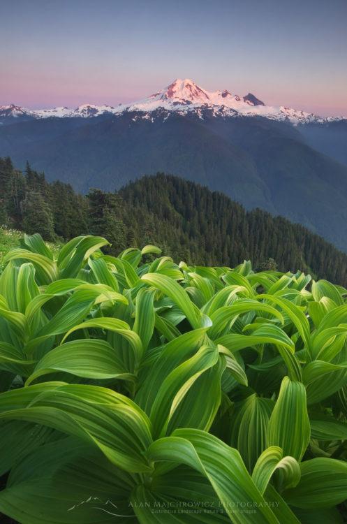 Mount Baker Wilderness North Cascades