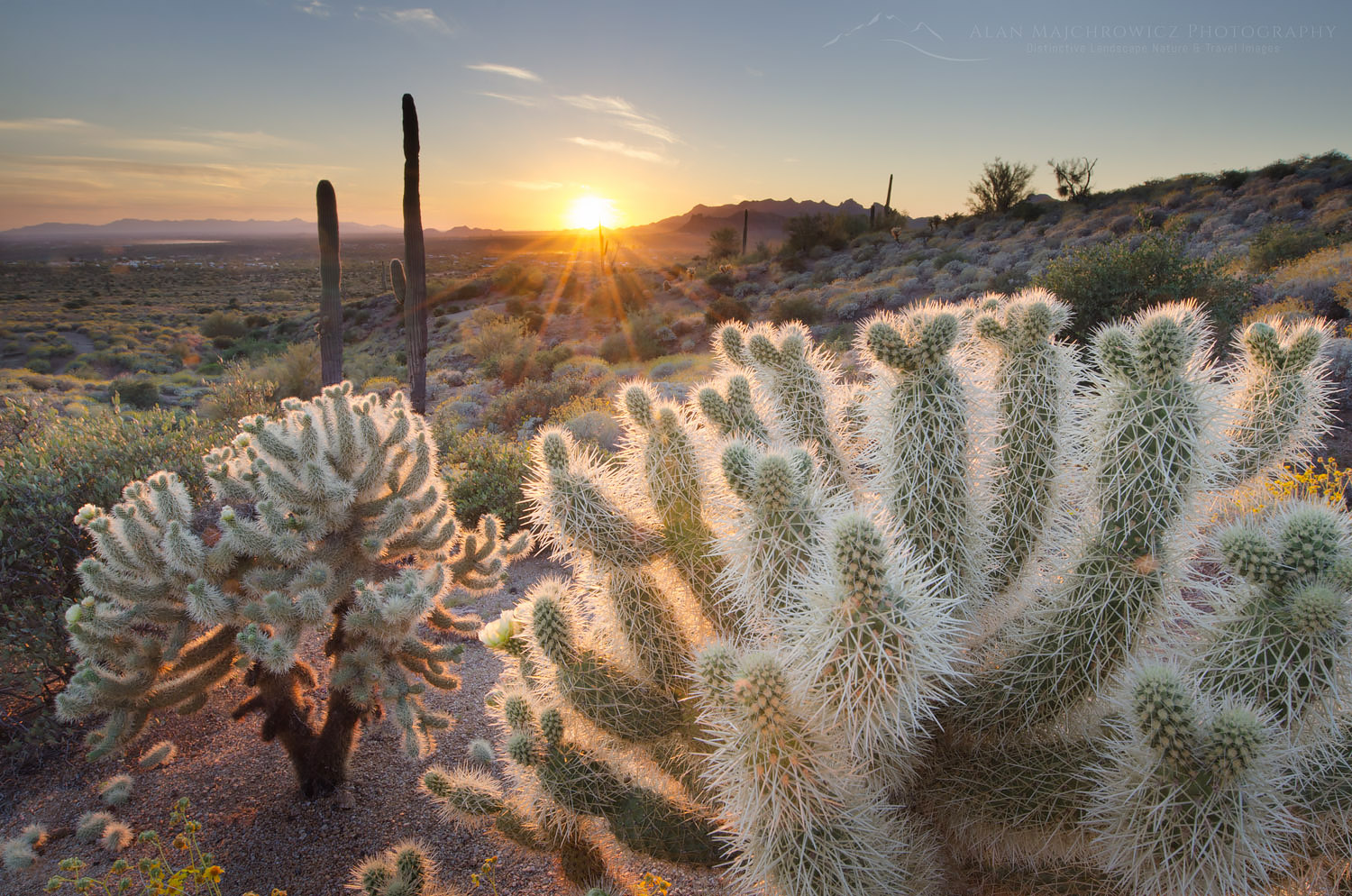 Cholla Cactus sunset Superstition Mountains sunset,  Arizona