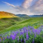Imnaha Canyon wildflowers Oregon