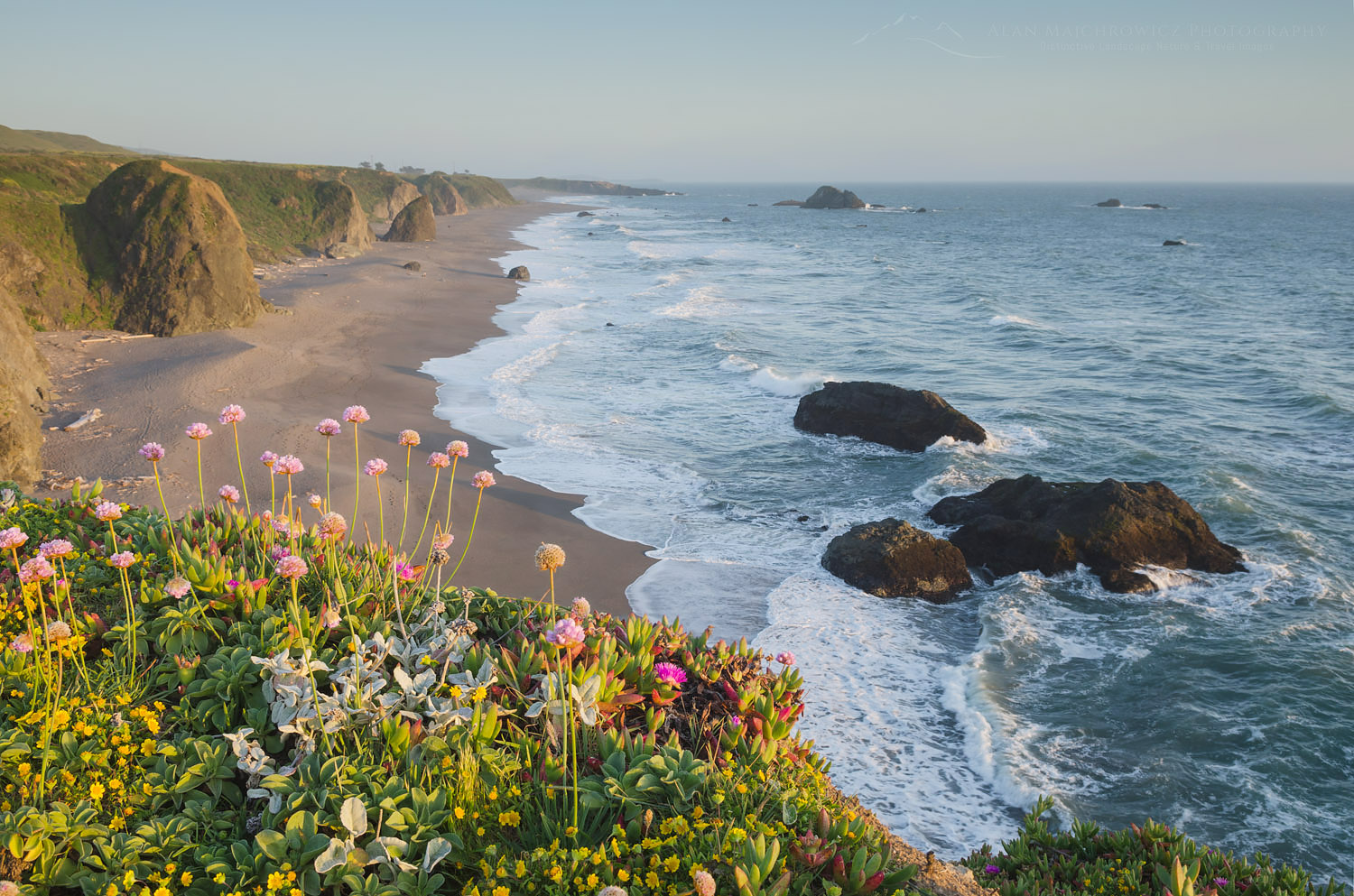 Sonoma Coast wildflowers, California
