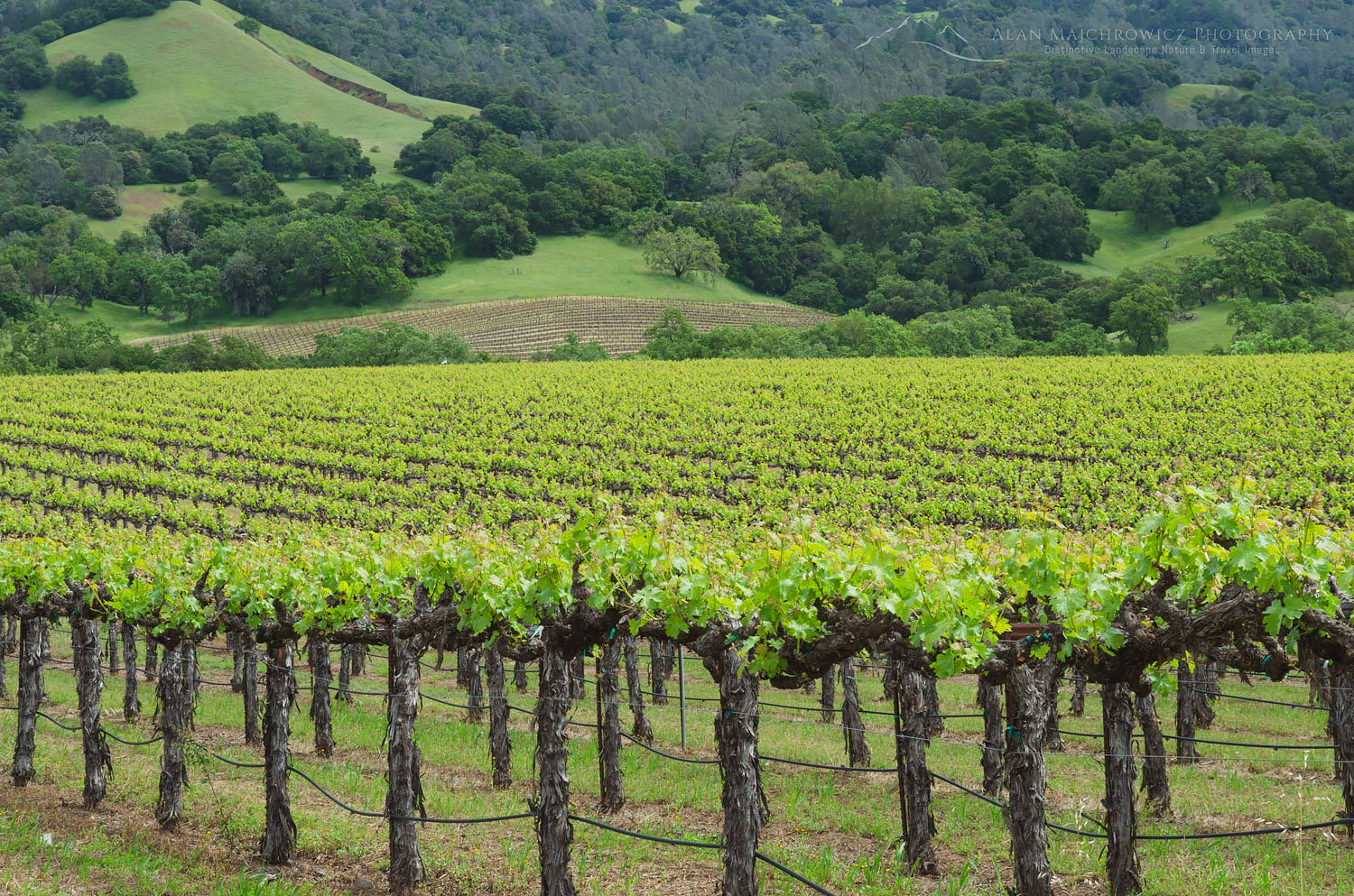 Sonoma Valley Vineyards