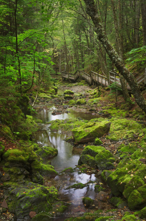 Dickson Falls Trail, Fundy National Park