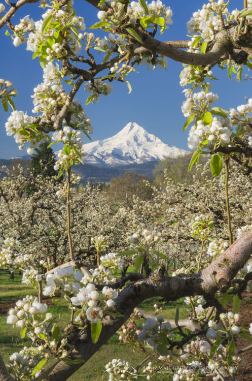 Hood River Valley Orchards, Oregon