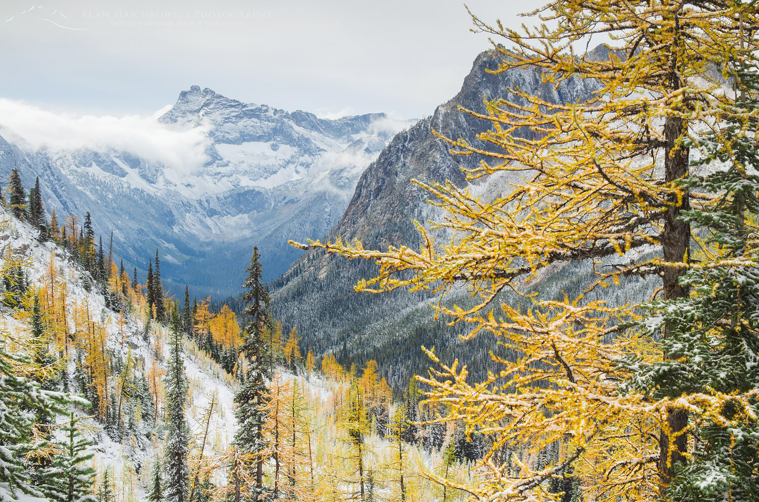 Cutthroat Pass Larches, North Cascades