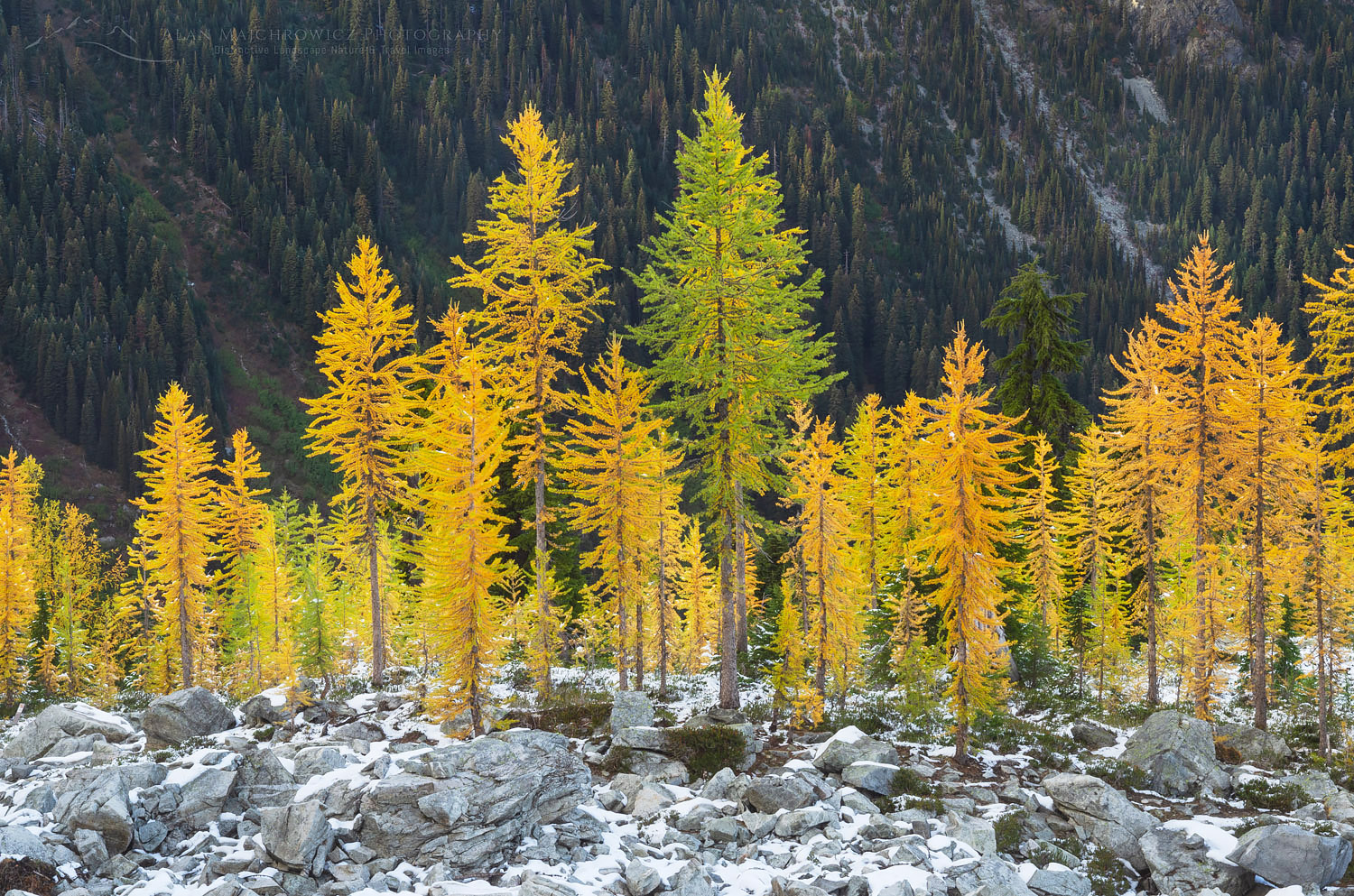 testAlpine Larches North Cascades