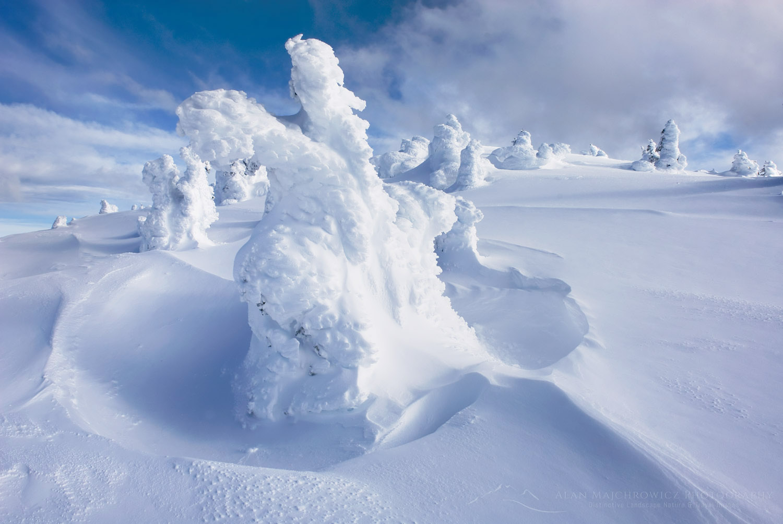 Ice encased trees Manning Provincial Park