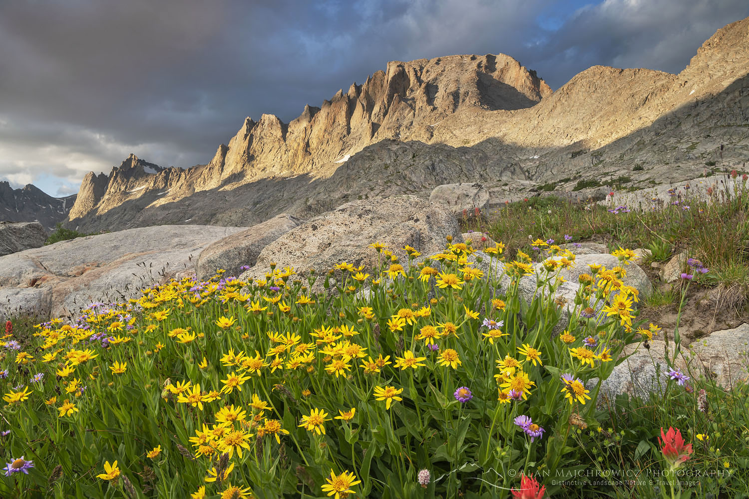 Titcomb Basin wildflowers Wind River Range Wyoming