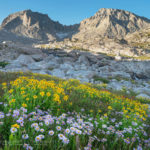 Indian Basin wildflowers Wind River Range wyoming