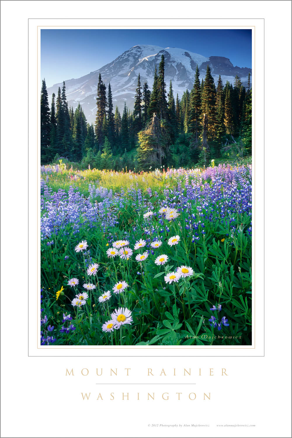 Paradise wildflower meadows, Mount Rainier National Park Washington