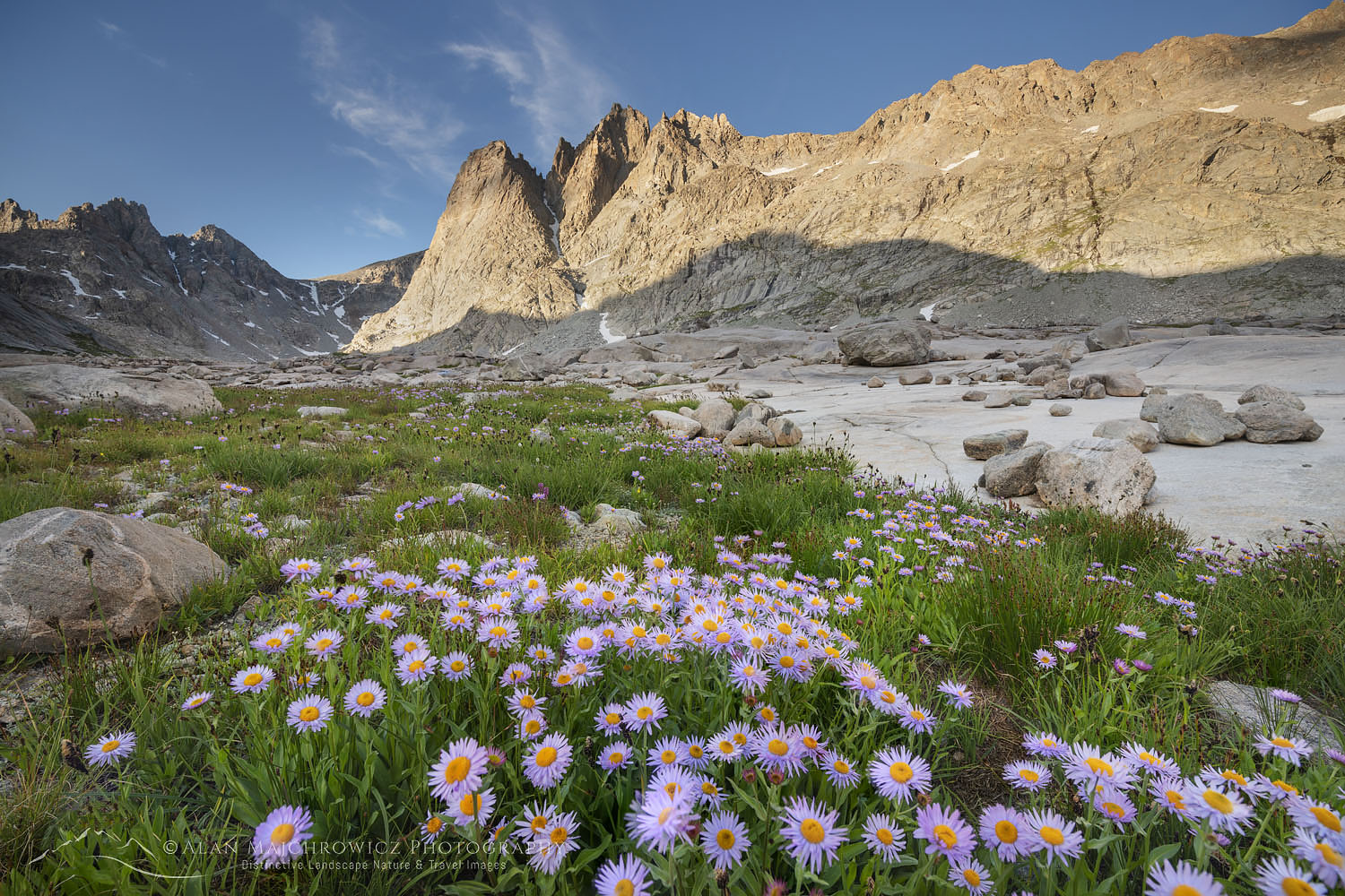 Mount Helen amd field of purple Asters growing in Upper Titcomb Basin, Bridger Wilderness, Wind River Range Wyoming