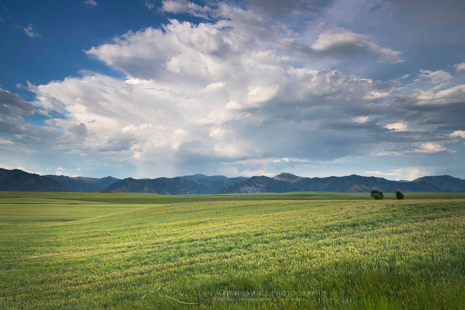 Snake River Plains Wheat Fields near Swan Valley, Idaho
