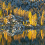 Purcell Mountains Larches British Columbia