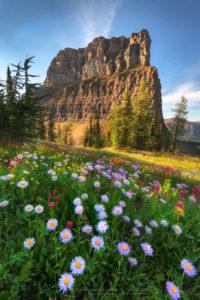 Boulder Pass wildflowers Glacier National Park