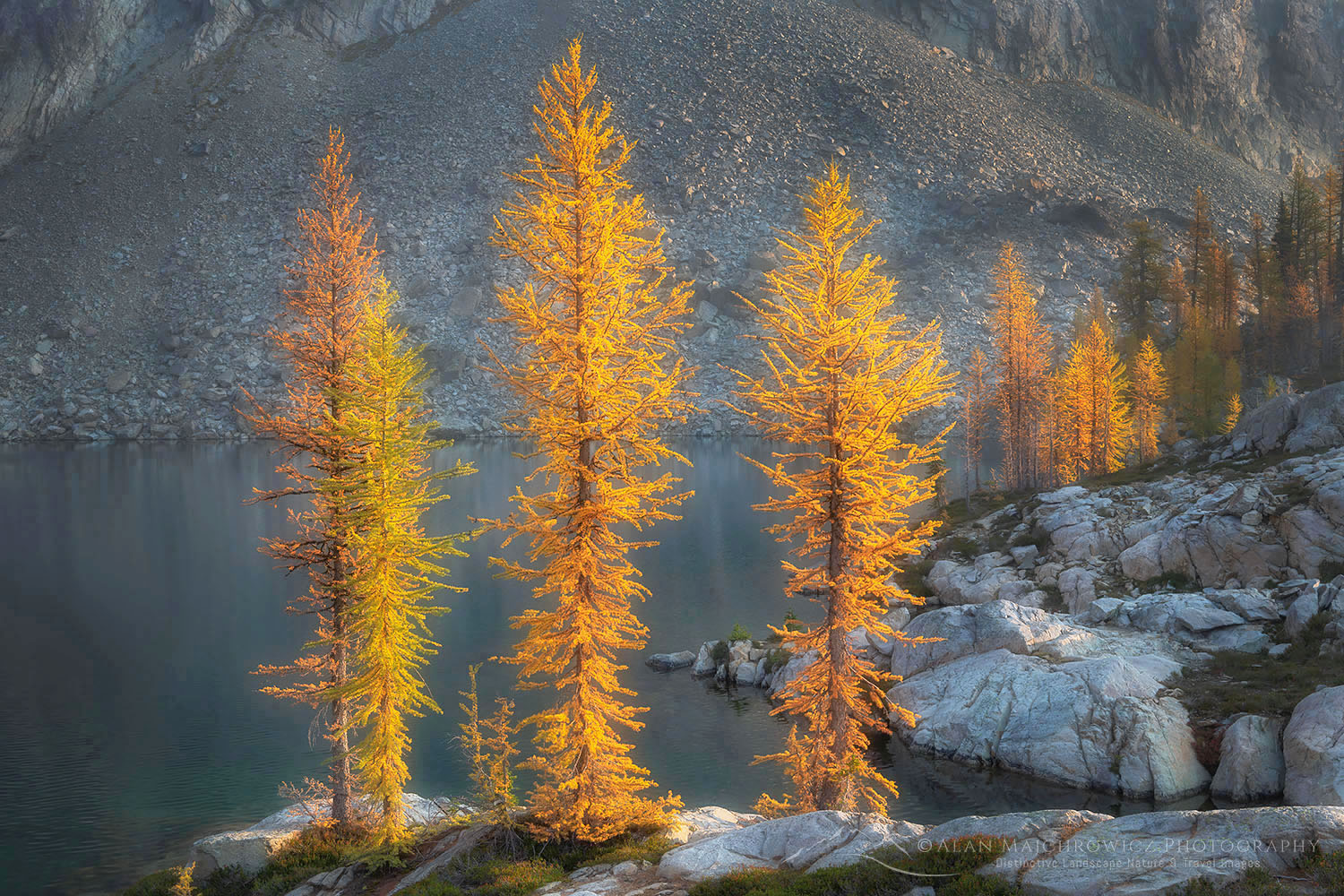 Subalpine Larches North Cascades