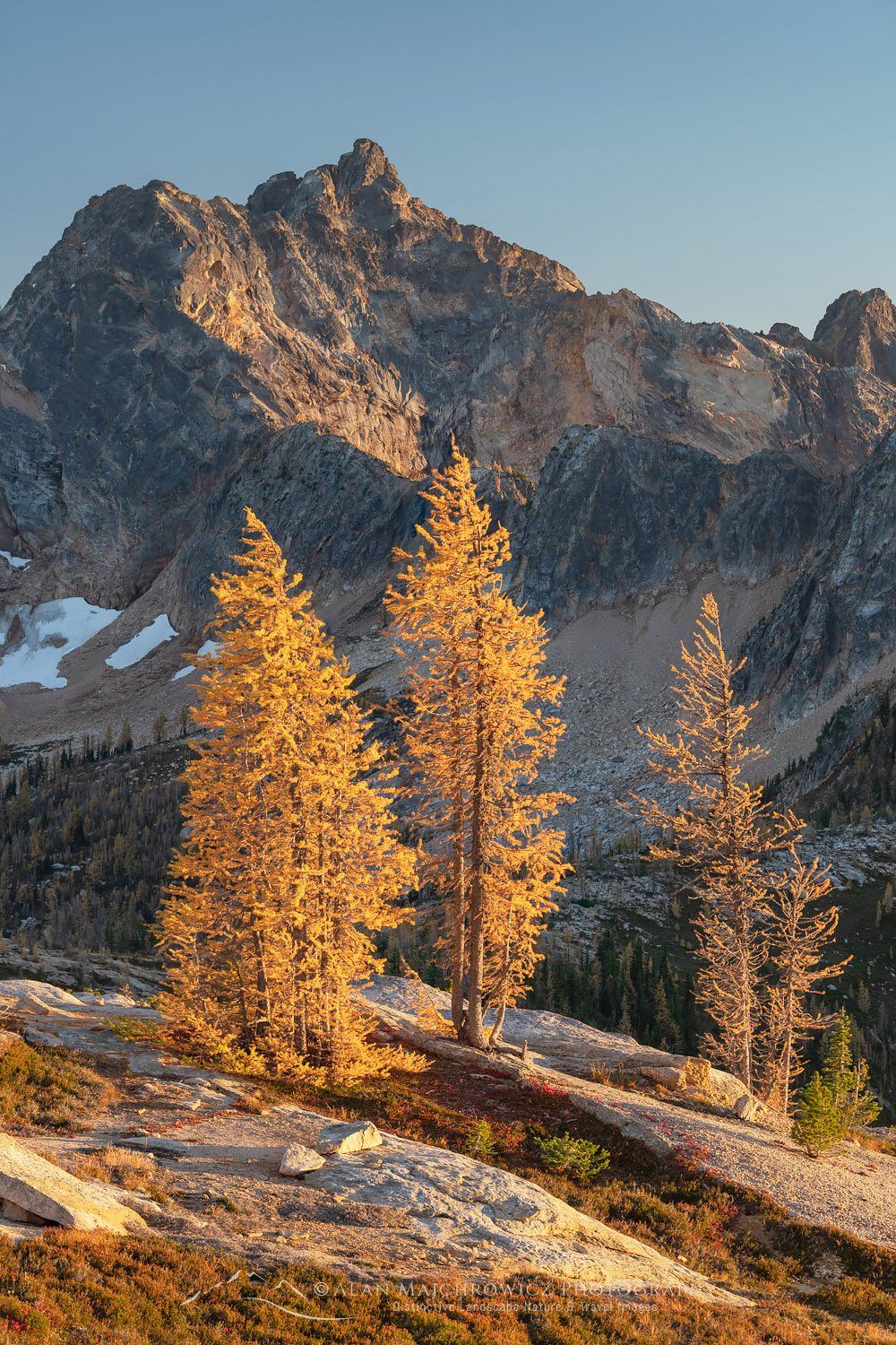 Subalpine Larches Cutthroat Peak North Cascades