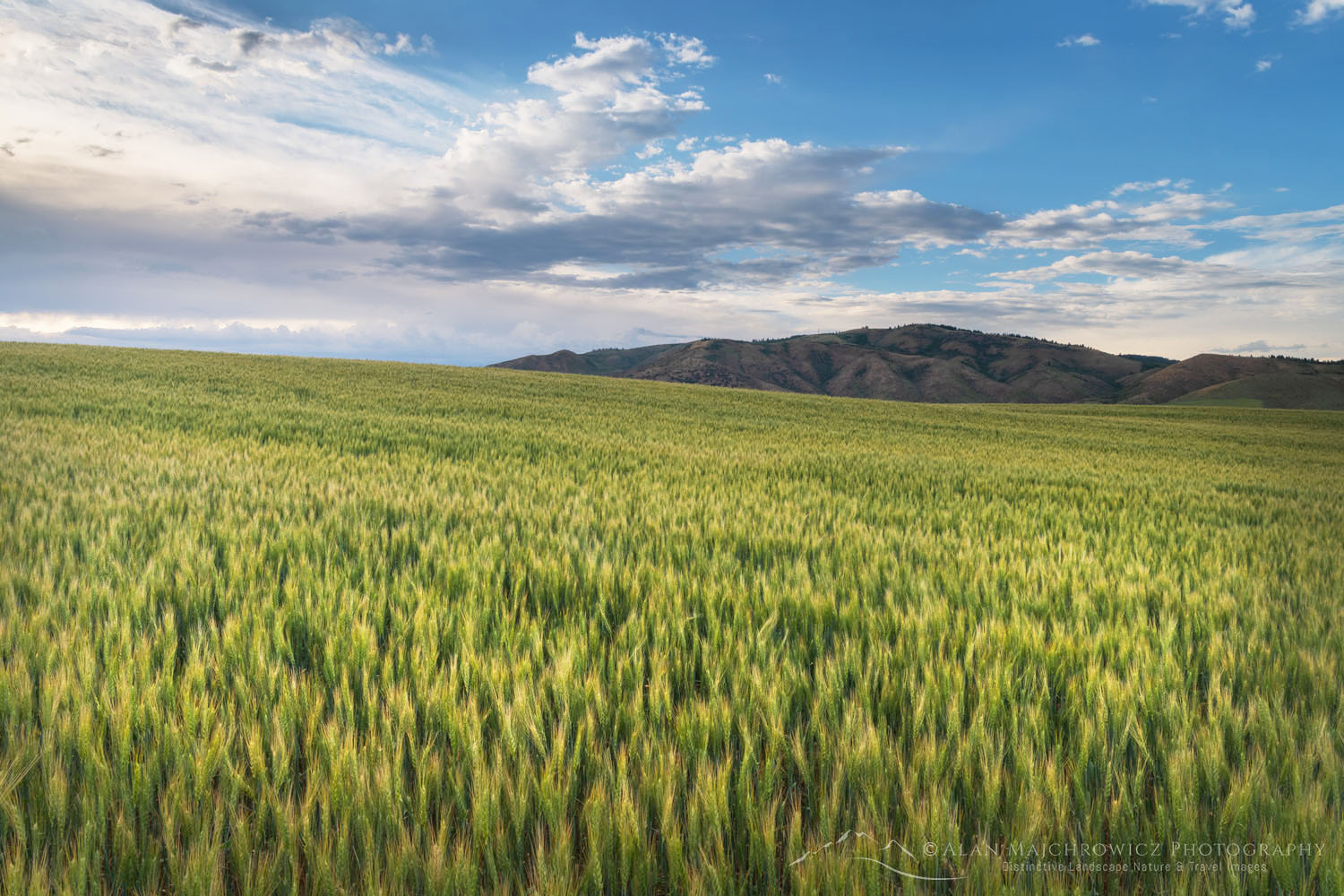 Wheat Fields Snake River Plain SE Idaho