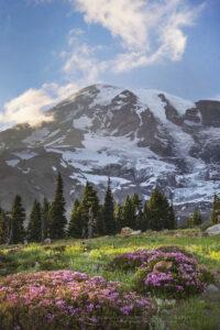 Paradise wildflower meadows Mount Rainier National Park